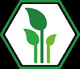 kasvava metsa ost